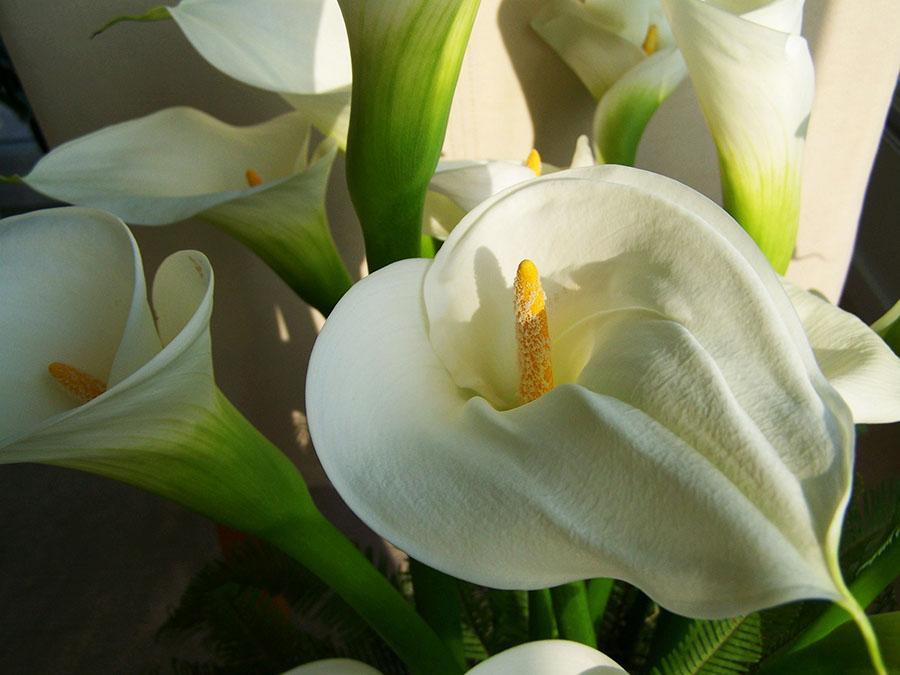Flores exóticas y silvestres
