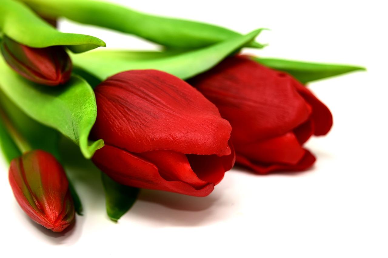 Flores naturales o artificiales